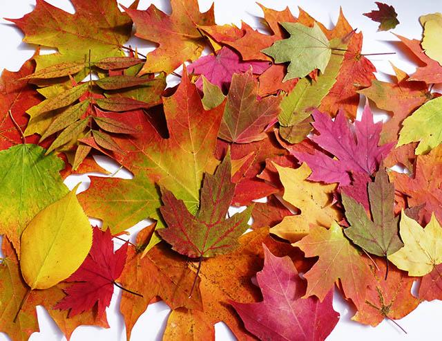 jesenna_dekoracia