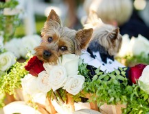 zvierata_na_svadbe