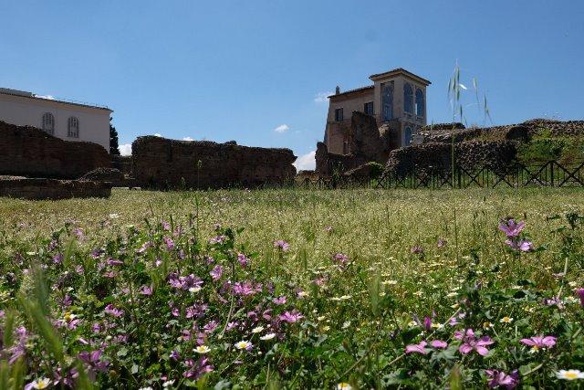 Rim svadba, Palatin 1